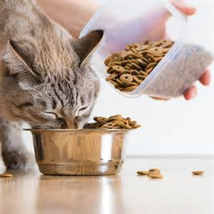 catfood